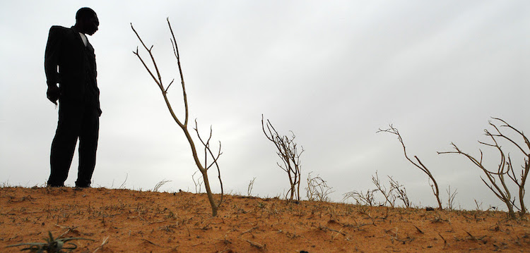 Photo: Newly planted wind breaks prevent wind erosion of dunes in Badoulerey, near Niamey, Niger. ©IFAD/David Rose